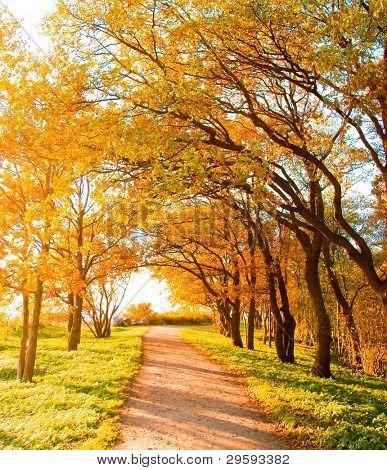 Summer Gone Falling Leaves