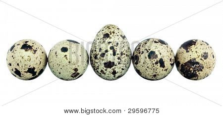 quail eggs laid in a row, isolated on white