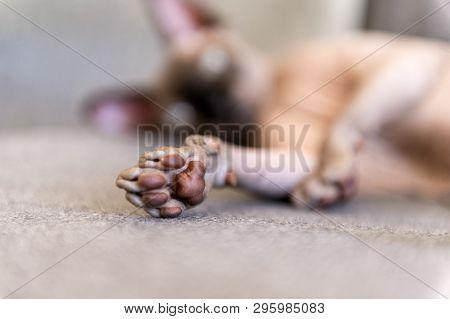 poster of Paw  Cat Closeup, Cat Lying, Paw  Cat Closeup, Cat Lying