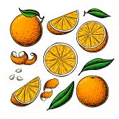 Orange Fruit Vector Drawing. Summer Food Engraved Illustration Isolated Hand Drawn Slice, Whole And  poster