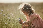 Girl In A Field Collects A Bouquet Of Flowers. Little Girl Collects Flowers In The Field poster