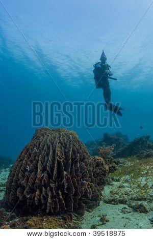scuba santa and the barrel sponge