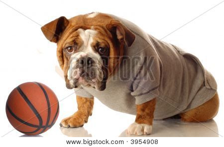 Bulldog Sweatsuit With Basketball
