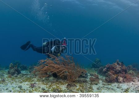 scuba santa on a reef