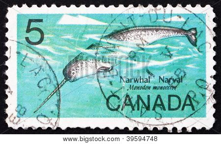 Postage stamp Canada 1967 Male Narwhal, Monodon Monoceros, Whale