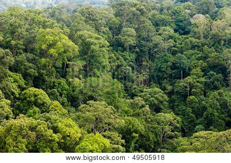 A view of the rainforest canopy from a high ridge
