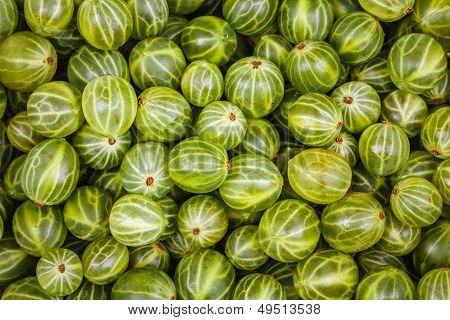 Gooseberries Green Background