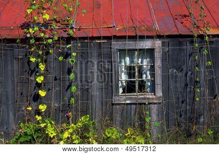 Old Country Shed