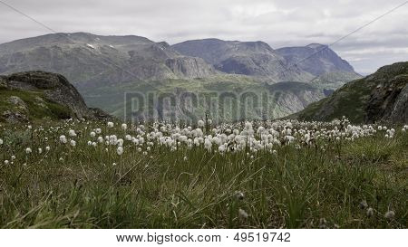 Flowers In The Mountain