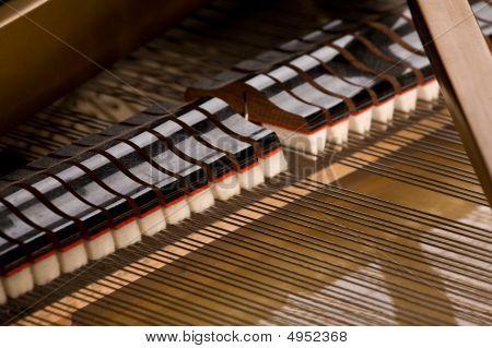 Grand Piano Close-up