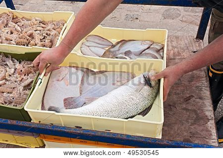 Crates Of Freshly Caught Fish
