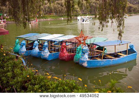 Dragon Paddle Boats