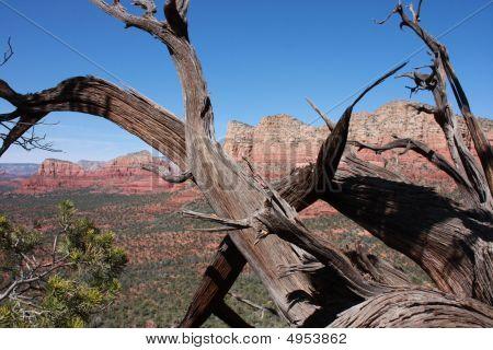 Sedona Cedar