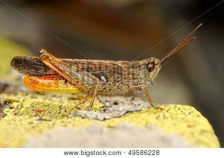 grasshopper outdoor