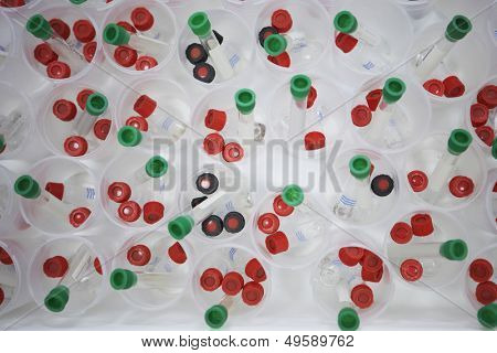 Tray full of speciman vials containing parasitic insects used in agricultural research