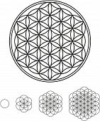 image of hexagon pattern  - Development of Flower of Life from a single circle to a complex symbol - JPG
