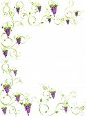 picture of grape-vine  - Framed purple grapes on vine with white background - JPG