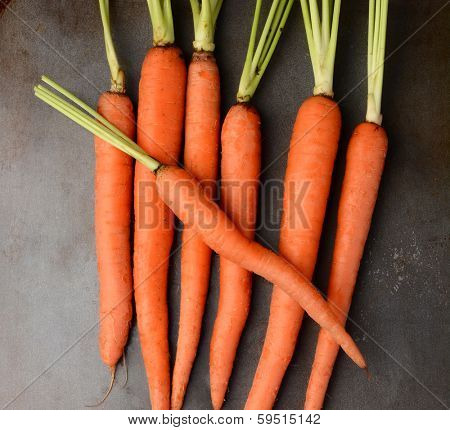 Fresh picked organic carrots on a metal cooking sheet. The leafy tops of the carrots have been cut off. Square format.