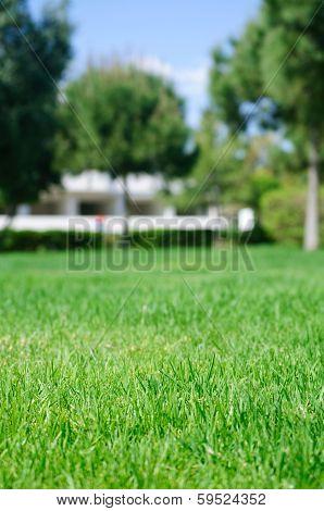 Fresh Juicy Grass