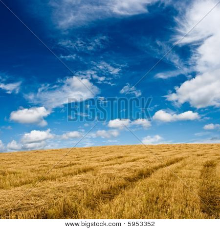 Golden Plain Under Blue Skies
