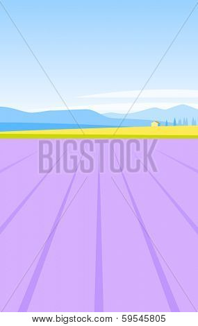 Provence lavender field natural background