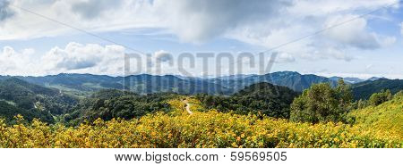 Panorama Field Of Flowers And Mountains