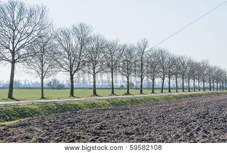 Row Of Bare Trees Along A Country Road