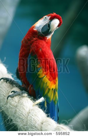 Parrot On A Rope