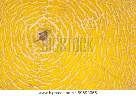 Concentric shaped Yellow Melon Close up