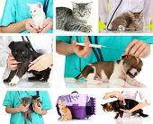foto of vet  - Collage of different pets at vet - JPG