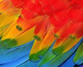 foto of green-winged macaw  - Texture and close up details of Scarlet Macaw Feathers