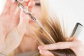 picture of hair cutting  - Hairdresser cut hair of a woman - JPG