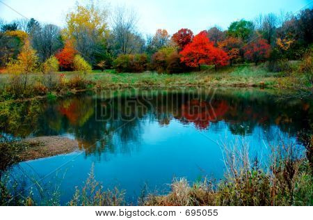 Autumn Foliage On Water