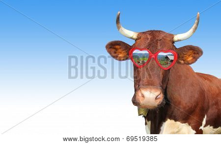 Funny Cow With Red Heart Shaped Spectacles
