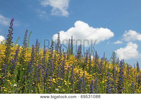 Flowery Meadow Of Wildflowers Against Blue Sky With Cloud