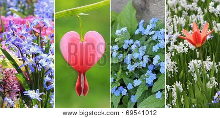Collage -  Spring Flowers, With Bleeding Heart, Tulip And Scilla