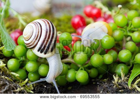 Snail in a Summer Garden