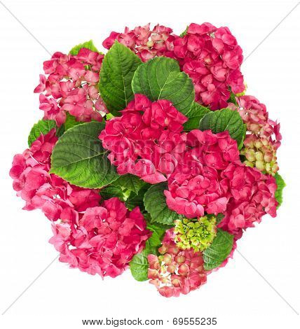 Hortensia Flowers Bouquet Isolated On White Background