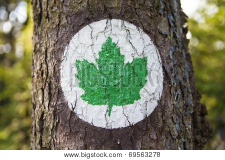 Ecology symbol - Green leaf sign painted on a tree trunk
