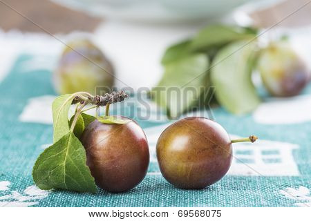 Closeup From Ecological Plums