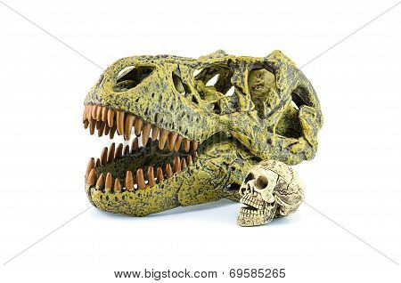 Human Skull And T-rex Isolated On White.