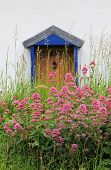 pic of english cottage garden  - home entrance with flowers in the front uk - JPG