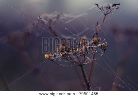 Spiderweb and flower