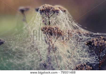 Spiderweb in autumn and flowers