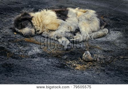 Dirty Abandoned Dog Sleeping In The Ash