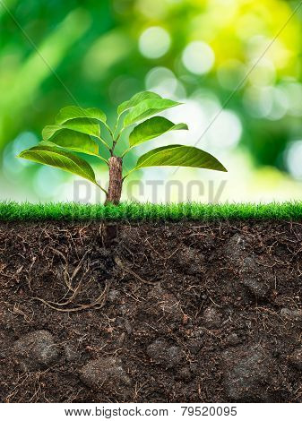 Tree And Soil With Grass