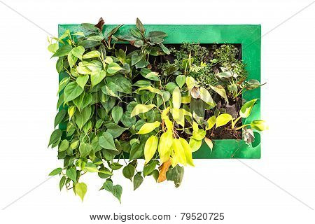 Hanging Houseplant For Decoration