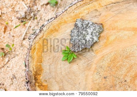 Cut Down A Tree With A Green Leaf