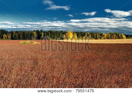 Field Of Grass On A Background Of An Autumn Forest