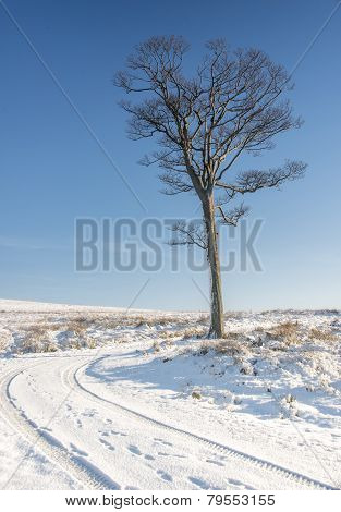 Yorkshire Winter Landscape